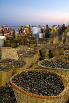 Acai-Beeren - ein Markt in Brasilien, hier werden die Beeren in großen Mengen verkauft