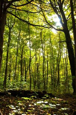 Äste im Wald suchen