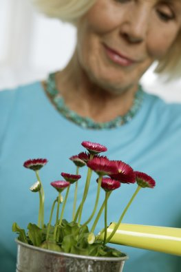 Alternativer Pflanzendünger für Zimmerpflanzen