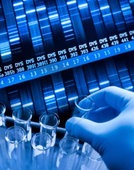 Analyse des DNA-Materials