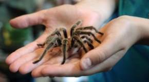 Angstbewältigung - Spinne auf der Hand
