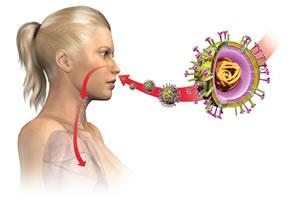 Ansteckung mit dem Schweinegrippe Virus