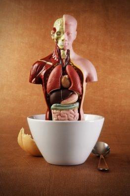 Anthropologie - Evolution der Nahrungszubereitung durch den Menschen