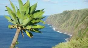 Azoren: Blick auf den Atlantik