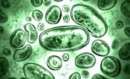 Bakterien im Darm sorgen für eine ausgeglichene Darmflora