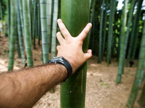 Bambus wächst auch in deutschen Gärten.