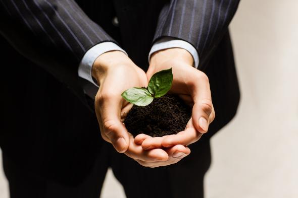 Baumsparen soll eine hohe Rendite bringen.