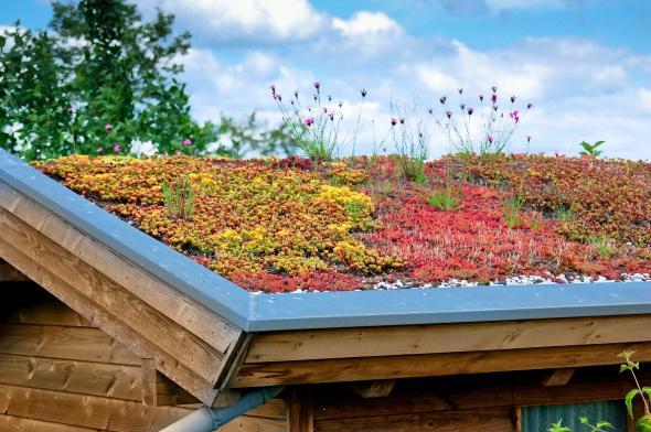 Dachbegrünung - das Dach von einem Holzhaus ist bepflanzt.