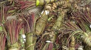 Beschlagnahmte Khat-Bündel in Somalia