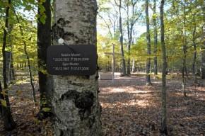 Schild mit Namen an einem Baum