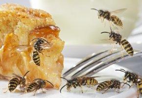Bienen belagern einen Kuchen