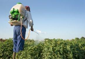Pestizide töten die Bienen.