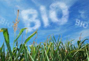 Bei Hipp verwendet man Bio-Gemüse aus Bioanbau
