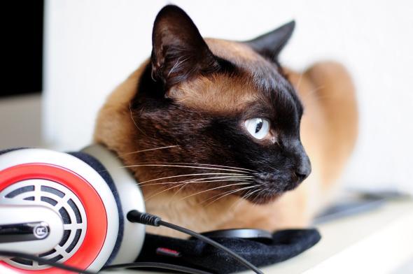 Bioakustik: Katzenschnurr-Therapie heilt kranke Menschen.