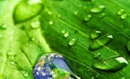 Biodiversität - Nachhaltigkeit von Unternehmen