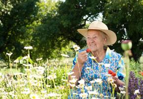 Biogarten rein Ökologisch
