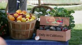 Only in California: Biokost - Gemüse und Obst aus regionalen Produkten