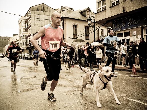 Canicross ist ein Hundelaufsport für Herrchen und Hund.