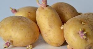 Chlorpropham ist ein Keimhemmer der Kartoffeln am keimen hindert.
