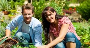 City Gardening - Gärtnern in der Stadt ist wieder angesagt.