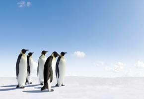 Cool bleiben, wie die Pinguine
