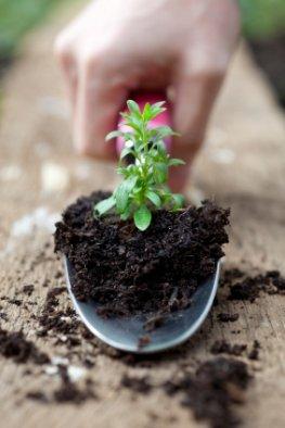 Das Hochbeet bepflanzen