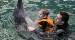Eine Delphintherapie kann kranken Menschen helfen.