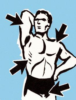 Der Mensch und seine Muskulatur