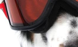Der richtige Winterschutz für ihren Hund