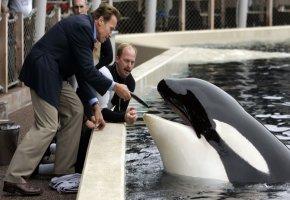 Der Terminator füttert einen Orca-Killerwal