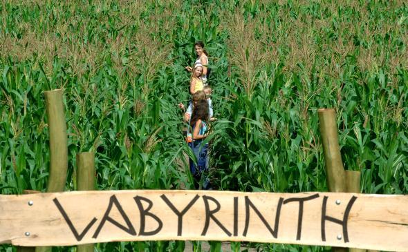 Eine Familie am Eingang von einem Maislabyrinth
