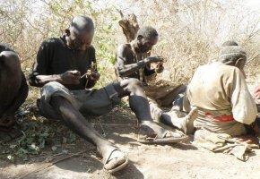 Die Hadza (Tansania) bauen neue Pfeile für die Jagd. Das Volk der Hadza brauchen nicht mehr Kalorien als Menschen in Industrieländern.