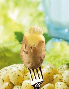 Die Kartoffel - Kohlenhydrate