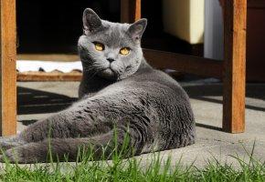 Die Katze liegt in der Sonne