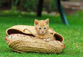 Die Katze sitzt in einer Tasche