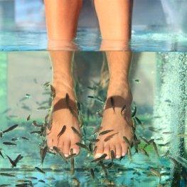 Die kleinen Kangalfische schnabbern die Hautschuppen von den Füßen weg