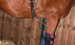 Die Magnetfeldtherapie kann auch bei Tieren angewendet werden