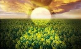 Die Wolke von Gudrun Pausewang