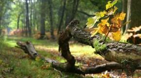 Ein Ast der auf dem Waldboden liegt