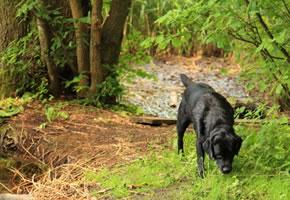 Ein Hund im Wald
