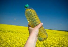 Rapsfeld und Rapsöl dienen der Energiegewinnung