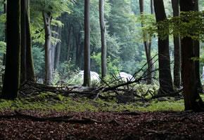 Ein Zeltlager der Pfadfinder im Wald