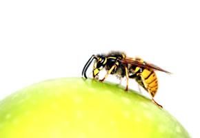 Eine Biene auf einem Apfel