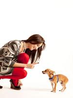Erziehung für den Hund ist wichtig