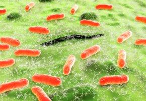 Escherichia-Coli Darmbakterien zersetzen die Nahrung im Darm