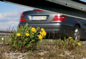 Feinstaubbelastung durch Straßenverkehr