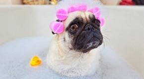 Fellpflege für Hunde - Pet Head von TIGI Hair Care
