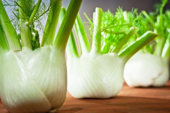 Fenchel ist schmackhaftes Gemüse das sehr gesund ist.