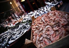 Schwermetalle im frischen Fisch?