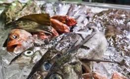 Besucher der SlowFisch-Messe bestaunen den ausgestellten Fisch